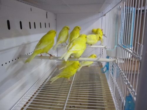 nouvelles_cages_ornibird__025.jpg